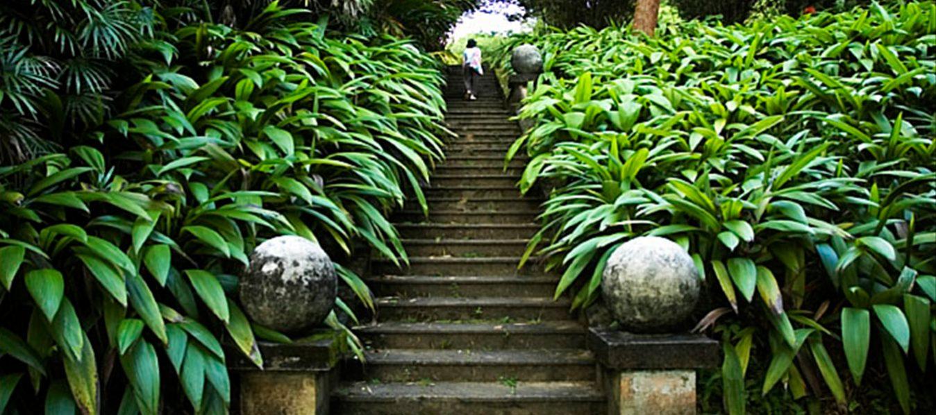 brief_garden_01